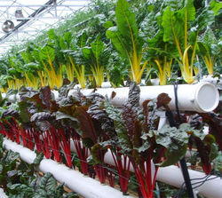 hydroponic plant nutrients china organic soil