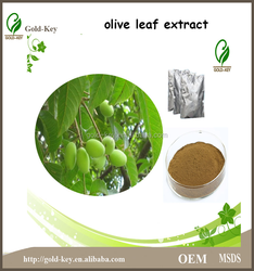 Hot Selling Olive Leaf Extract in Herbal Extract