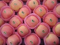 chinese bulk sale fresh fuji apple fruit