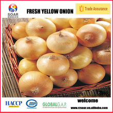 export fresh red onion with low price