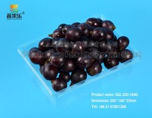 specialized factory OEM square shape fruit tray SGL-200-160D