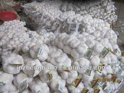 2015 China new fresh garlic price