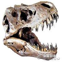 Discover skeleton for museum Dinosaur fossil