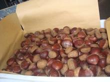 Nuovi prodotti 2015 castagna fresca/cibi sani castagne/rinfusa castagne/castagna fresca biologica per la vendita