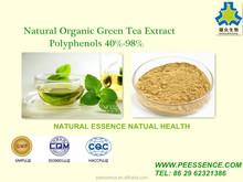 GMP Factory Supply Top Quality Green Tea Extract 98% polyphenols