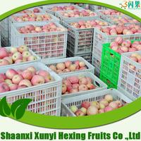 fresh fruit--red fuji apple-- grade ABC mix