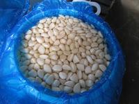 2015 new crop pickled garlic cloves, garlic in brine salted garlic cloves