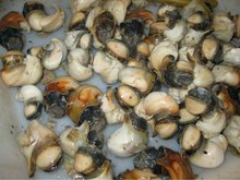 TOP SHELL MEAT
