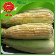 Preço por tonelada congelado amarelo milho fornecedor