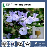 Factory price dried rosemary leaves,rose mary leaf , rosemary herb Extract powder