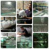 tropical fish farm and export company