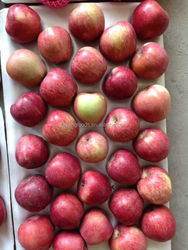 Fresh Gala Apple from shandong province