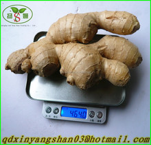 Dried ginger/Chinese dried/fresh ginger price on hot sale