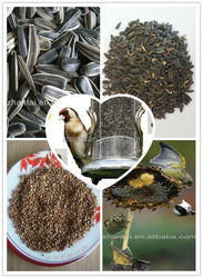 wholesale canary seed bird