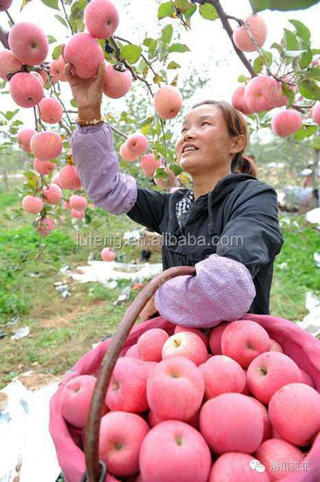 2014 new crop Fuji Apple with high quality and competitive price