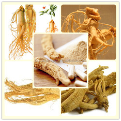 american ginseng root/american ginseng extract powder/american ginseng root extract