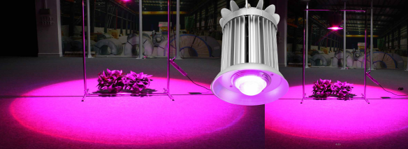 2 150W 300W cob led grow light