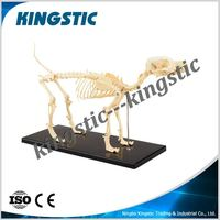 Dog skeleton model,animal skeleton model,artificial skeleton