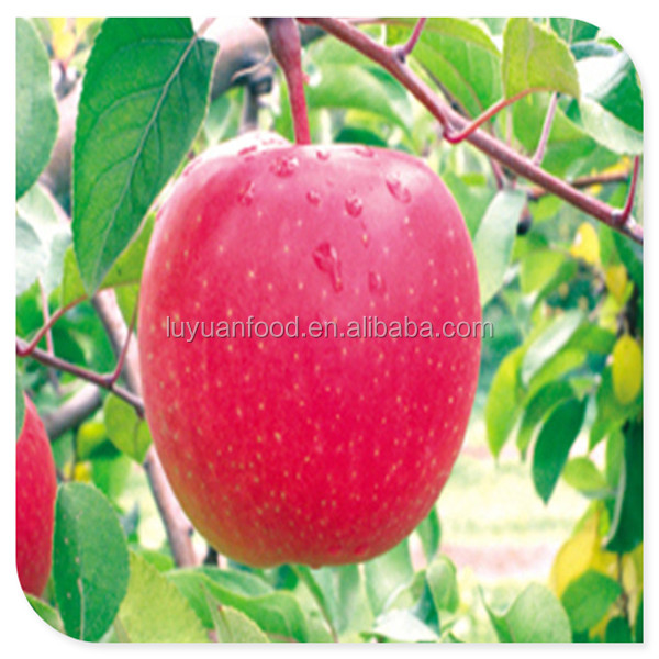 Offer chinese delicious fresh apple with low price &high quality