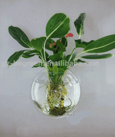 Fish tank for coffee table,fish tank decoration,fish tank for wall mounted