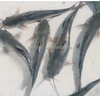 the frozen cat fish/catfish of 1-2kg,2-4kg and 4kg+