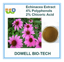 100% Natural Echinacea Purpurea Herb Extract/ Echinacea Purpurea Extract/Echinacea Extract