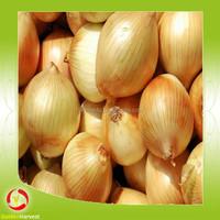 2015 hot sell Fresh organic vegetable,peeled fresh onion