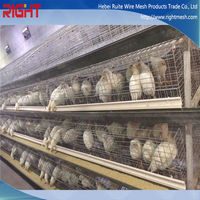 hot sale chicken cage in Africa / chicken egg layer cage for sale (manufacturer)