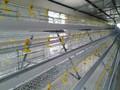 Alambre de pollo galvanizado con costura metal jaulas para pájaros y animal / negro malla de alambre de pollo