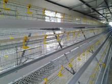 wire chicken galvanized/welded metal cages for birds and animal/black chicken wire mesh