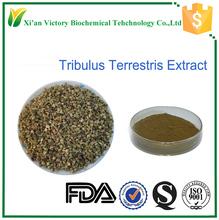 Free sample tribulus terrestris extract total saponins 80%