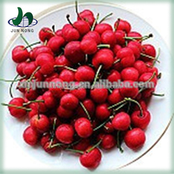 Famous canned fruits seedless cherries