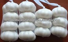 5.0cm Pure White Garlic