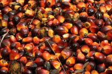 CRUDE PALM OIL FOR BIODIESEL