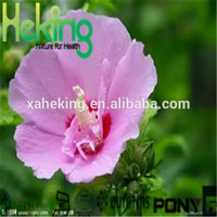 pure hibiscus concentrate powder