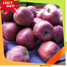 Wholesale Huaniu apple,Fresh and delicious