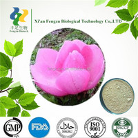 GMP Standard Manufacturer Supply Magnolia Flower Extract