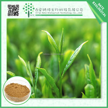 Trustworthy China supplier tea polyphenols green tea extract 10:1