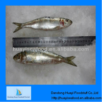 frozen perfect best sardine exporter for best quality