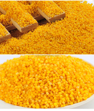 Top quality professional Yellow Millet