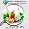 Normal White Garlic Fresh Natural Garlic Extract