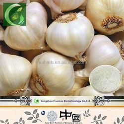 2014 high quality detoxicating alliin allicin extract liquid/powder, anti-bacteria pure alliin oil garlic