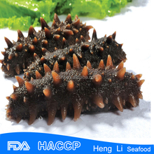 HL011 Health Canada Sea Cucumber