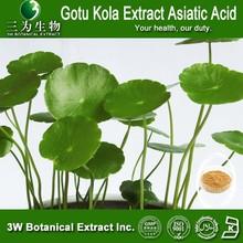 GMP Factory Sale Gotu Kola Extract Asiaticosides