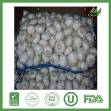 fresh new pure white garlic 5.0cm