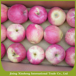 Fresh Qinguan apple sweet delicious