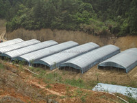 manufacture high quality Anti-uv greenhouse plastic film for planting fruits and vegetables