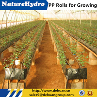 Hydroponic Nutrients Planting Tomatoes With PP Rolls