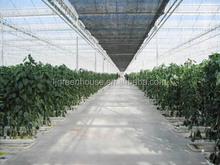 antirust galvanized steel frame venlo/doom glass greenhouses for plant
