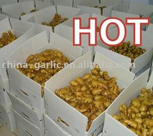 Chinese Fresh And Air-Dry Ginger With Top Quality & Competitive Price